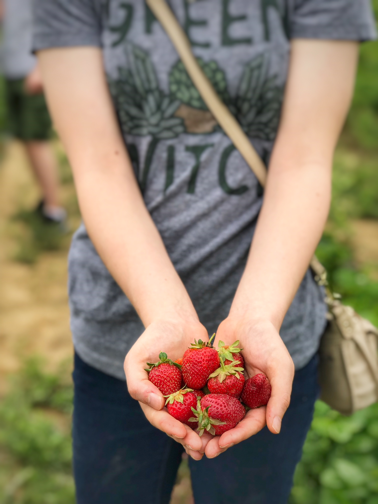 A family tradition-Picking strawberries at Holly Fork Farm-from two different perspectives