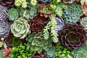 All about Succulents & Cacti, find more at gossamerydreams.com