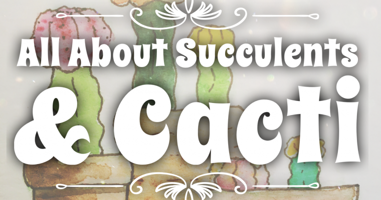 All about Succulents & Cacti: What I've learned so far (Part 1)…Moon Cactus!