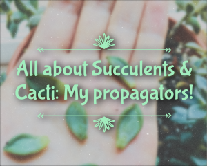 All about Succulents & Cacti: My propagators! Read about it at gossamerydreams.com