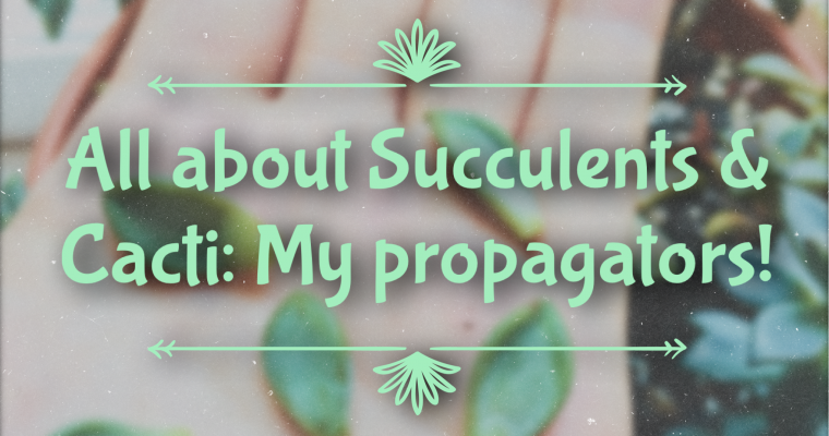 All about Succulents & Cacti: My propagators!